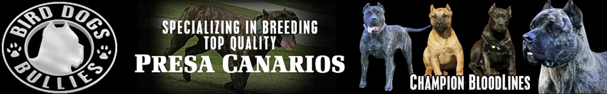 BirdDogsBullies Banner
